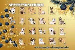 Adventsalender-Hund