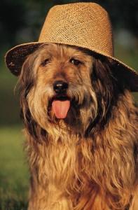 Hund-Hitze