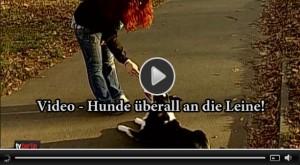 Video Hunde an die Leine