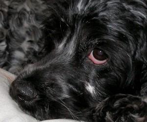 Hundefell