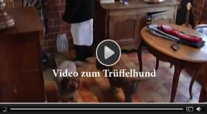 Trueffelhunde