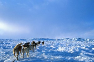 Hachiko – ein Hundeleben